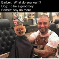 Barber What Do You Want: Barber: What do you want?  Dog: To be a good boy  Barber: Say no more