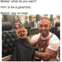 This is everything. (via @sweetkaratemoves) (photo of @preston_thepom): Barber: what do you want?  Him: to be a good boy  Barber: say no more  sweetkaratermoves This is everything. (via @sweetkaratemoves) (photo of @preston_thepom)