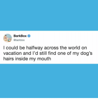 Dogs, Love, and Memes: BarkBox  @barkbox  l could be halfway across the world on  vacation and l'd still find one of my dog's  hairs inside my mouth Can I get an Amen from all those who love a shedder?? Because thestruggleisREAL 🙏 SendUsYourPrayers SendUsYourHairs dog dogpeople dogpeoplegetit shed doghair CanIGetAnAmen AMEN