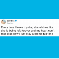 Dogs, Memes, and Forever: BarkBox  @barkbox  OX  Every time I leave my dog she whines like  she is being left forever and my heart can't  take it so now I just stay at home full time It's a real Grey Gardens situation and so far it's FABULOUS 🙌 dogs BigEdie LittleEdie dog GreyGardens parenting