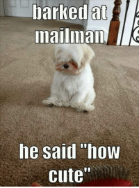 "barked at  mailmam  he said ""how  cute"" cute indeed :D"