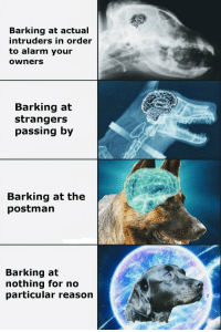 Dogs, Meme, and Memes: Barking at actual  intruders in order  to alarm your  owners  Barking at  strangers  passing by  Barking at the  postman  Barking at  nothing for no  particular reason Exploding brain meme except its for dogs via /r/memes http://bit.ly/2RUGhFQ