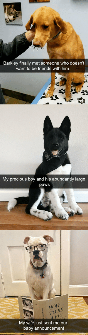 Friends, Precious, and Target: Barkley finally met someone who doesn't  want to be friends with himm   My precious boy and his abundantly large  paws   HOW  TO BE  3IC  3/G  My wife just sent me our  baby announcement Dog snapsvia @animalsnaps​