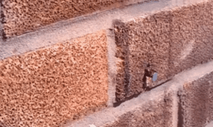 Reddit, Shit, and Tumblr: barneyodell: helloworldhavefun:  shialaballs:  sixpenceee:  This video shows a bee removing a nail to get into wall. Damn! (Source)  Scariest shit ive seen on sixpenceee.  cool!   Amazing strong little bee