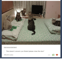 Humans of Tumblr, The Doors, and Pleased: barrenwonderland  'this doesn't concern you Robert please close the door  303,633 notes