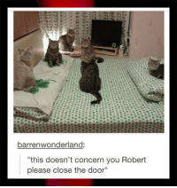 """Business, Cat, and You: barrenwonderland  this doesn't concern you Robert  please close the door"""" <p>Cat Business In Progress.</p>"""