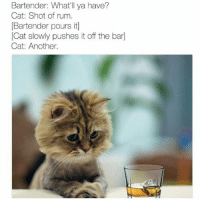 @ayehoodmemes is a meme god.: Bartender: What'll ya have?  Cat: Shot of rum.  Bartender pours itl  Cat slowly pushes it off the barl  Cat: Another. @ayehoodmemes is a meme god.