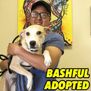 Life, Love, and Memes: BASHFUL  ADOPTED  BREEd BASHFUL ADOPTED❤️ We are so excited for adorable Bashful! This baby will enjoy endlessly romping, playing and most important, endless love!  HAPPY LIFE BASHFUL!❤️ #bashfulnybc #nybcpuppies #nybcalumni #nybcadopters #adoptdontshop
