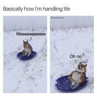 Memes, 🤖, and Basic: Basically how I'm handling life  @dorky borky  Oh no This is so much.......wait, I'm not having fun anymore. Go follow @dorkyborky @dorkyborky @dorkyborky best new dog meme page