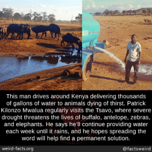 He cares so much for the animals, this is amazing: BATER  This man drives around Kenya delivering thousands  of gallons of water to animals dying of thirst. Patrick  Kilonzo Mwalua regularly visits the Tsavo, where severe  drought threatens the lives of buffalo, antelope, zebras,  and elephants. He says hell continue providing water  each week until it rains, and he hopes spreading the  word will help find a permanent solution.  weird-facts.org  @factsweird He cares so much for the animals, this is amazing