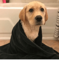 Memes, The Worst, and Time: Bath time is the worst @kinsleythelab
