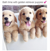 Finna adopt four female Golden Retrievers and name them Dorothy, Rose, Blanche, and Sophia ... ... the Golden Girls 😍😂😂😂: Bath time with golden retriever puppies  Dr Smashlove Finna adopt four female Golden Retrievers and name them Dorothy, Rose, Blanche, and Sophia ... ... the Golden Girls 😍😂😂😂