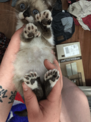 Love, Foot, and She: BATHROOM WALL SHEL My new love! She's a polydactyl she has 6 toes on each foot! Any names?
