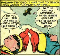 Batman, Life, and Shut Up: BATMAN DECIDED IT WAS TIME TO TEACH  ROBIN ABOUT THEFACTS OF LIFE...  SHUT UP  AND PAY  ATTENTION.'  THOSE BIRDS  LOOK LIKE  UH... FEEL  LIKE THIS IS  JUST A LITTLE  BIT WEIRD?  THEYRE GONNA  TAKE THE  SAIT. Just Batman being a good mentor.