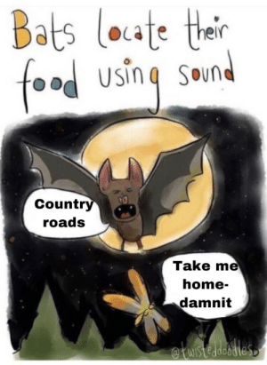 west virginia: Bats loate thair  food  SOund  Country  roads  Take me  home-  damnit  WIstedeodles west virginia