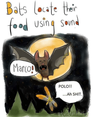 Gets them every time.: Bats loate their  foad using Smnd  Marco!  POLO!!  ..Ah SHIT  etuistedesties Gets them every time.