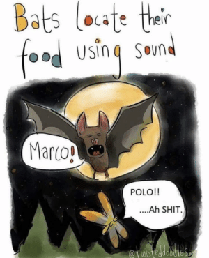 I love this: Bats loate ther  food using  SOun  Marco!  POLO!!  ....Ah SHIT.  fuistedobdies I love this