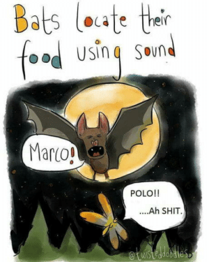 Smart move: Bats loute their  foa  Usin  SOund  Marco!  POLO!!  ....Ah SHIT  etuisteadoties Smart move