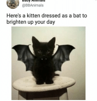 Always helps | Follow @aranjevi for more!: @BBAnimals  Here's a kitten dressed as a bat to  brighten up your day Always helps | Follow @aranjevi for more!
