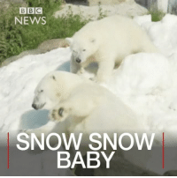 28 JUL: Truck loads of snow has arrived at a zoo in Lapland in northern Finland so that the resident polar bears have some snow to play in the warm weather. Snow Weather PolarBears Zoo RukaSkiCentre RaunaWildlifePark Lapland Finlad Europe BBCShorts BBCNews @bbcnews: BBC  BIBIC  NEWS  SNOW SNOW  BABY 28 JUL: Truck loads of snow has arrived at a zoo in Lapland in northern Finland so that the resident polar bears have some snow to play in the warm weather. Snow Weather PolarBears Zoo RukaSkiCentre RaunaWildlifePark Lapland Finlad Europe BBCShorts BBCNews @bbcnews
