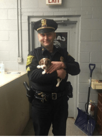Memes, Puppies, and Social Media: bbc  CV  I IL/I LOVE These Happy Endings....this is what it is all about !  THANK YOU  It's a happy day ! With the combined efforts of Cairo police department officer Bush and a detective from Fishkill and social media the puppy has been found safe and sound and being returned to the owner now. Thank you everyone.