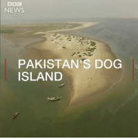 Meet the fishermen who help stray dogs on an uninhabited island off Karachi in Pakistan. There isn't any fresh water there and barely any food so the dogs rely on their generosity. dog dogs dogsofinstagram karachi pakistan: BBC  NEWS  PAKISTAN'S DOG  ISLAND Meet the fishermen who help stray dogs on an uninhabited island off Karachi in Pakistan. There isn't any fresh water there and barely any food so the dogs rely on their generosity. dog dogs dogsofinstagram karachi pakistan