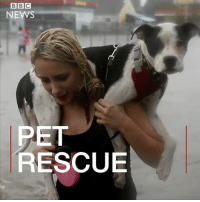Animal rescue groups are working around the clock to save pets made homeless by Tropical Storm Harvey. Some distraught pet owners have been forced to make the heartbreaking decision to leave their pets behind as they flee heavy floods caused by the storm in Texas. Stray animals are also being saved, by groups like @austinpetsalive. dog cat pet home harvey texas austin houstonflood houston stray animalrescue rescue shelterdog hurricaneharvey hope: BBC  NEWS  PET  RESCUE Animal rescue groups are working around the clock to save pets made homeless by Tropical Storm Harvey. Some distraught pet owners have been forced to make the heartbreaking decision to leave their pets behind as they flee heavy floods caused by the storm in Texas. Stray animals are also being saved, by groups like @austinpetsalive. dog cat pet home harvey texas austin houstonflood houston stray animalrescue rescue shelterdog hurricaneharvey hope