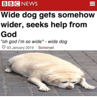"Me🐕irl: BBCNEWS  Wide dog gets somehow  wider, seeks help from  God  oh god i'm so wide"" wide dog  O 03 January 2019 Somerset  bearb0O Me🐕irl"