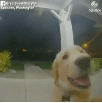 Memes, News, and House: bc  Greg Basel/Storvful  Spokane, Washington  NEWS @Regran_ed from @abcnews - RUFF NIGHT: This dog was locked out of the house when he escaped, but he appeared to know exactly how to ring the doorbell to get back inside. - regrann