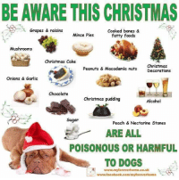 Fyi....: BE AWARE THIS CHRISTMAS  Grapes & raisins  Cooked bones &  fatty foods  Mince Pies  Mushrooms  Christmas Cake  Christmas  Decorations  Peanuts & Macadamia nuts  Onions & Garlic  Chocolate  Christmas pudding  Alcohol  2  Sugar  Peach & Nectarine Stones  ARE ALL  POISONOUS OR HARMFUL  TO DOGSt  www.myforeverhome.co.uk  www.faceboak.com/myforeverhome Fyi....