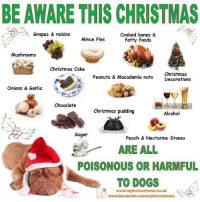 Bones, Memes, and Alcohol: BE AWARE THIS CHRISTMAS  Grapes & raisins  Cooked bones &  Mince Pies  fatty foods  Mushrooms  Christmas Cake  Christmas  Peanuts & Macadamia nuts  Decorations  Onions & Garlic  Chocolate  Christmas pudding  Alcohol  Sugar  Peach & Nectarine Stones  ARE ALL  POISONOUS OR HARMFUL  TO DOGS  R www.myforeverhome.co.uk  www.facebook.com/myforeverhome https://www.facebook.com/MyForeverHome/