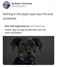 Dogs, New York, and News: Be Better Tomorroww  @VtheEsquire  Nothing in this dog's eyes says this was  accidental.  New York Daily News @NYDailyNews  Hunter says his dog accidentally shot him  nydn.us/2Diag4U 😭😭😭