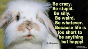 Monday motivation... www.best4bunny.com: Be crazy  Be stupid.  Be silly.  Be weird.  Be whatever.  Because life is  too short to  be anything  but happy!  Best4bunny.com Monday motivation... www.best4bunny.com
