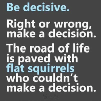 I'm a squirrel trying to get a 🥜: Be decisive.  Right or wrong,  make a decision.  The road of life  is paved with  flat squirrels  who couldn't  make a decision. I'm a squirrel trying to get a 🥜