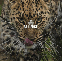"""Memes, Success, and 🤖: BE FIERCE Looking to start 2018 right? Repeat this out loud: """"This is the year I will be stronger, braver, kinder, unstoppable. This year I will be FIERCE."""" 🔥 - fierce newyear success millionairementor"""