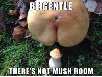 Mush, Room, and Not: BE GENTLE  THERE'S NOT MUSH ROOM