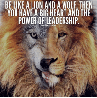 The perfect combo. Do you agree? Tag a friend! - Follow @motivateron for more! motivateron: BE LIKE A LION AND A WOLF, THEN  YOU HAVE A BIG HEART AND THE  POWER OF LEADERSHIP  MOTIVATERON The perfect combo. Do you agree? Tag a friend! - Follow @motivateron for more! motivateron