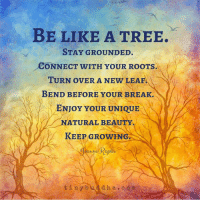 Tiny Buddha: BE LIKE A TREE.  STAY GROUNDED.  CONNECT WITH YOUR ROOTS.  TURN OVER A NEW LEAF  BEND BEFORE YOUR BREAK.  N  ENJOY YOUR UNIQUE  NATURAL BEAUTY  KEEP GROWH  mune Papas  t i n y b  u a d h a c o m Tiny Buddha