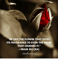 """Ali, Be Like, and Memes: """"BE LIKE THE FLOWER THAT GIVES  ITS FRAGRANCE TO EVEN THE HAND  THAT CRUSHES IT.  IMAM ALI (RA)  islam4everyone """"Be like the flower that gives its fragrance to even the hand that crushes it."""" - Imam Ali (ra)"""