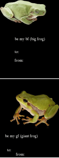 Giant, Big, and Frog: be my bf (big frog)  to:  from:   be my gf (giant frog)  to:  from: