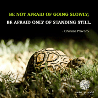 : BE NOT AFRAID OF GOING SLOWLY;  BE AFRAID ONLY OF STANDING STILL.  Chinese Proverb  wake up world  TS TIME TO RISE AND SHINE