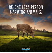 Animals, Memes, and Kindness: BE ONE LESS PERSON  HARMING ANIMALS  MERCY FOR  A NIM ALS Vegans save lives! 💗 govegan vegansofig mercyforanimals loveanimals kindness animallovers lovemydog
