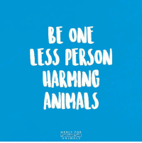 Animals, Memes, and Kindness: BE ONE  LESS PERSON  WARMING  ANIMALS  MERCY FOR  ANIM ALS 💯 govegan vegansofig mercyforanimals loveanimals kindness animallovers