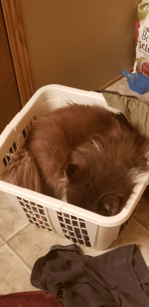He pulls out just enough of my dirty laundry to make it more comfy.: Be  Sel  L MADE MITH  Uh Carm  TNE 1 He pulls out just enough of my dirty laundry to make it more comfy.