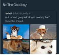 """Funny, Animal, and Cool: Be The Goodboy  rachel @RachelJaeRyan  and today I googled """"dog in cowboy hat""""  Show this thread 22 Cool Animal Pictures From This Week That Are Actually Funny"""
