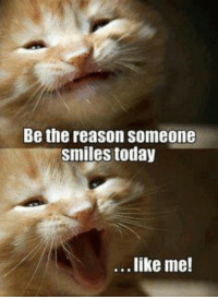 Kittys Purrsuit of Happiness =^..^= Good morning Monday!: Be the reason someone  smiles today  like me! Kittys Purrsuit of Happiness =^..^= Good morning Monday!