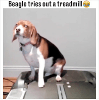 25 Best Beagle Memes Dial Memes The Memes Need Attention Memes