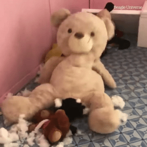 Nothing to see here, just a huge teddy bear giving birth to a puppy... 🤔😂  Credit: Beagle Universe: Beagle Universe Nothing to see here, just a huge teddy bear giving birth to a puppy... 🤔😂  Credit: Beagle Universe