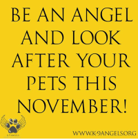 Advice, Dogs, and Memes: BEAN ANGEL  AND LOOK  AFTER YOUR  PETS THIS  NOVEMBER!  WWW.K9ANGELS.ORG  K-9 ANGELS FIREWORK ADVICE We have pooled together some of the best advice on looking after your pets during the early part of November. please see links below.  Please, be an angel - look after your pets this November! https://www.dogstrust.org.uk/help-advice/dog-behaviour-health/sound-therapy-for-pets https://www.rspca.org.uk/adviceandwelfare/pets/general/fireworks https://www.bluecross.org.uk/pet-advice/dogs-and-fireworks-how-keep-your-dog-happy-during-fireworks-season  #DogsTrust #RSPCA #BlueCross