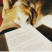 I love his snuggles. My boy Bruce. 🐶📚: BEAR AND BONE  ()N> Susannah Dean, and true  ·arne at them in a rumbling lol. it was like  The bi  ctory machine over which sorneone had thrown  rnawsay fa  watching  looks like a hat. A little steel-hat'  but it didnt look like, aha, to her It  d like  looke  lish a much s  maller, version of the kind she had seen in  new steel st  ones about how the DEW line was keeping  ate hom  a Russian sneak attack. It was bigger than the  e had shot off s then boeake at earlier, ln  boulder earlier, but the distance was  n and shado  ns ran across it in deceiving dapples.  dermot aim u it  h my hand, she who auns with her hand has  er-he face of heY father  it  or shoot ue th my hand, she uho shoots uith her hand has  f her father  inOtL. I'll miss!  h my gun, she teho kills tilth her gun  oared Susannah shoot it  znpulled、she saw the bullet go  thing more or less than her heart  fear fell away what was  o  time to  and the I love his snuggles. My boy Bruce. 🐶📚